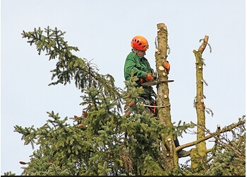 Mesquite tree service Weave's Tree Services