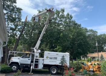 Springfield tree service Western Mass Tree Care