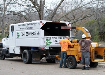 Dallas tree service White Rock Tree Wizards