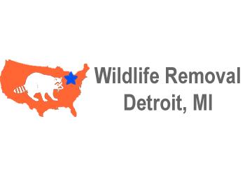 Detroit animal removal Wildlife Removal Detroit