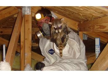 Hartford animal removal Wildlife Removal Hartford