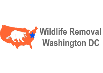 Washington animal removal Wildlife Removal Washington DC