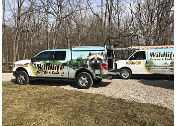 Indianapolis animal removal Wildlife Rescue and Control Inc.