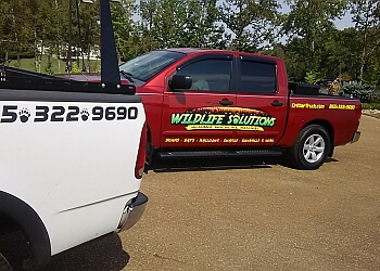 Knoxville animal removal Wildlife Solutions LLC.