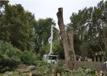 Kansas City tree service Wilson's Tree Service