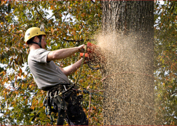 Alexandria tree service Woodlawn Tree Service