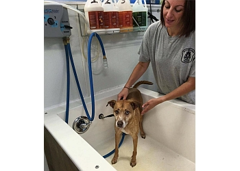Pittsburgh pet grooming Woody's Dog Wash & Boutique