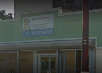Stamford pet grooming Woof To Purrfection