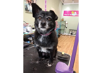 Hayward pet grooming Woof & Wash Pet Grooming