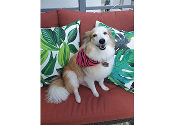Long Beach pet grooming Wrigley's Pet Spaw