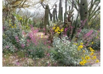 Glendale places to see Xeriscape Botanical Garden