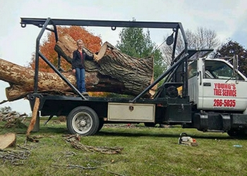 Des Moines tree service Young's Tree Service