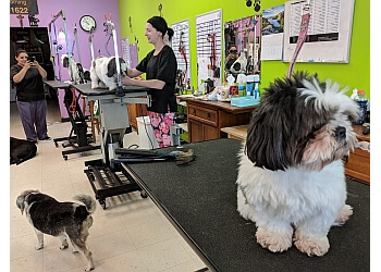 Lincoln pet grooming Your Precious Pets