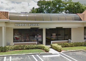 Coral Springs pet grooming  Yuppy Puppy & Company, Inc.