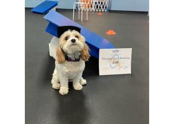 Huntington Beach dog training Zoom Room Dog Training