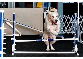 Los Angeles dog training Zoom Room Dog Training